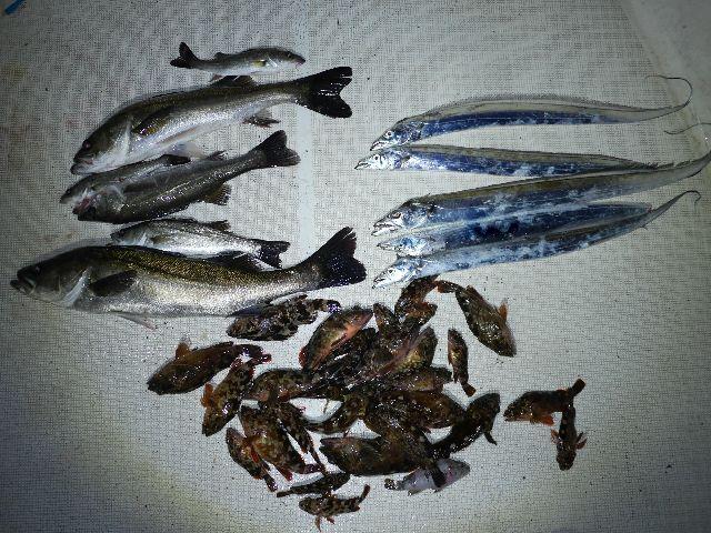 シーバス&タチウオ&根魚 釣果写真