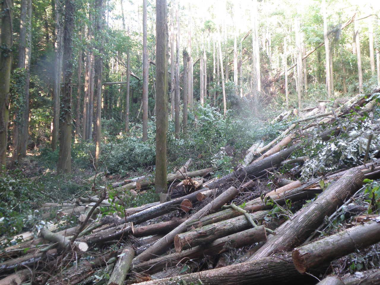 「伐採」の検索結果 - Yahoo!検索(画像)