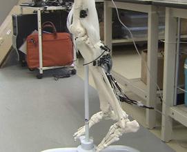 世界最細の人工筋肉開発 サムソンと共同研究