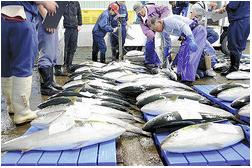 サンマ1匹1600円以上、もう庶民の魚じゃない…北海道の海に異変