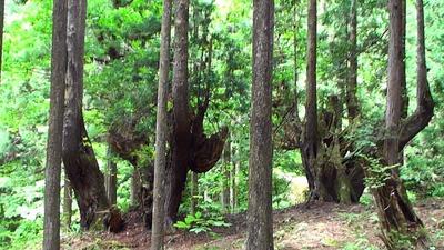 熟年夫婦21世紀の森3