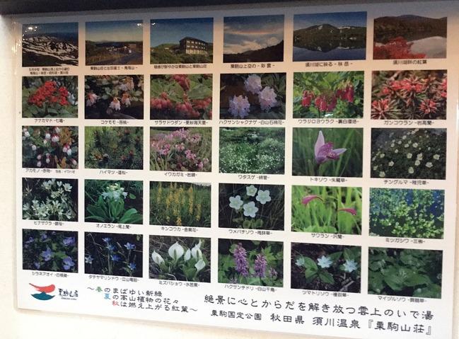 栗駒山登山98