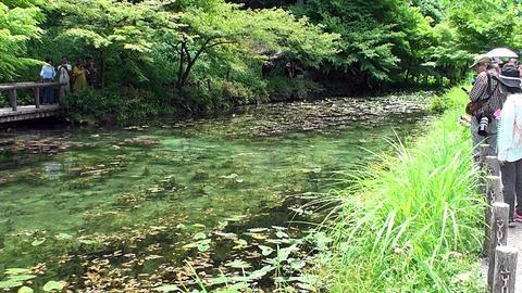 熟年夫婦モネの池3