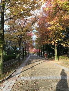 木々が色付き始めました
