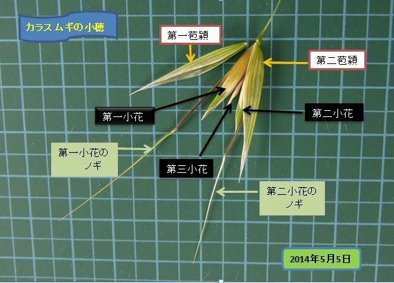 karasumugi2014-1-04burogu