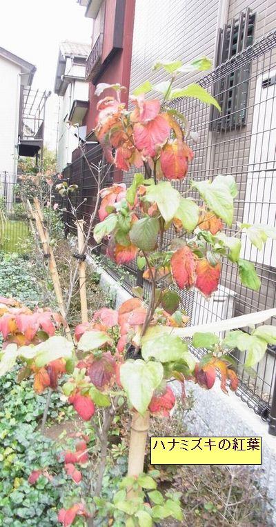 matikadosannpo-kouyouiroiro04-burogu