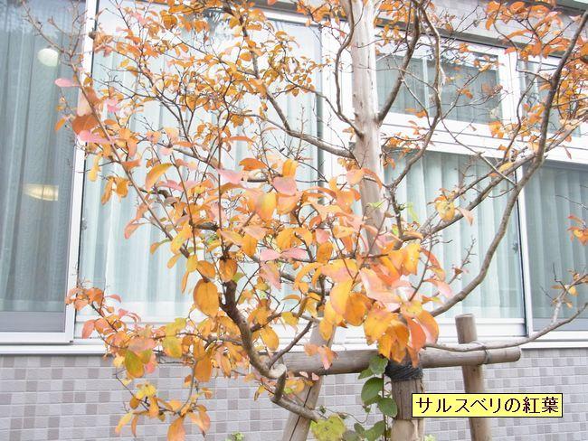 matikadosannpo-kouyouiroiro01-burogu