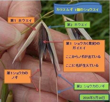 karasumugi2014-1-05-burogu