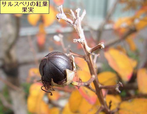matikadosannpo-kouyouiroiro03-burogu