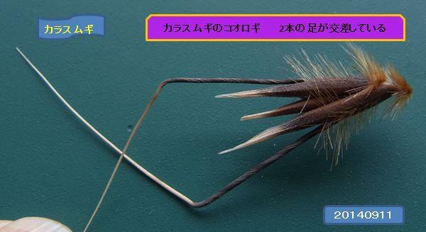 karasumugikoorogi06-burogu