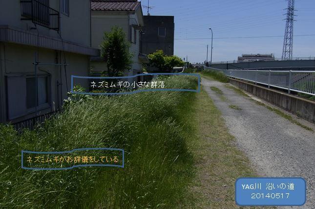 yagkawazoimiti003-burogu
