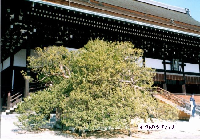 kyoutogoshonoaki01-burogu
