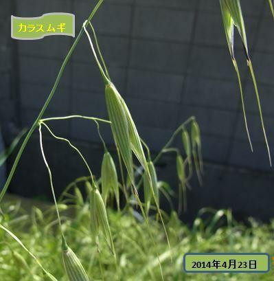 yagkawazoi-yasou201404-02-burogu