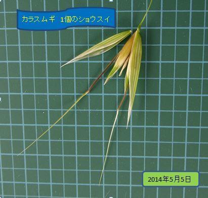 karasumugi2014-1-03burogu