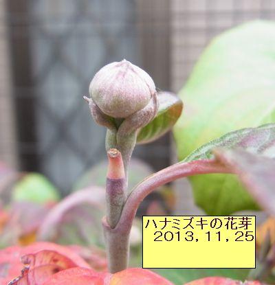matikadosannpo-kouyouiroiro06-burogu