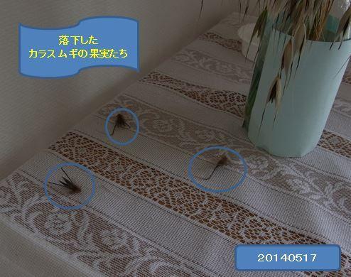 karasumugikoorogi02-burogu