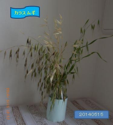 karasumugikoorogi01-burogu