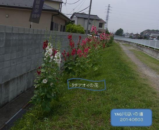 yagkawazoimiti004-burogu