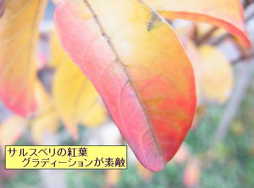 matikadosannpo-kouyouiroiro02-burogu
