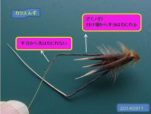 karasumugikoorogi05-burogu