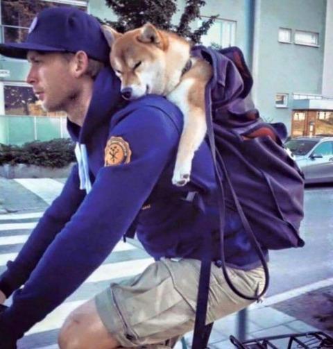 【わんこ】主人の背中で寝ている柴犬が可愛いすぎて話題に
