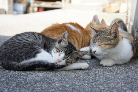 【猫】SOSを出した猫の島・青島に大量の支援物資が届き嬉しい悲鳴
