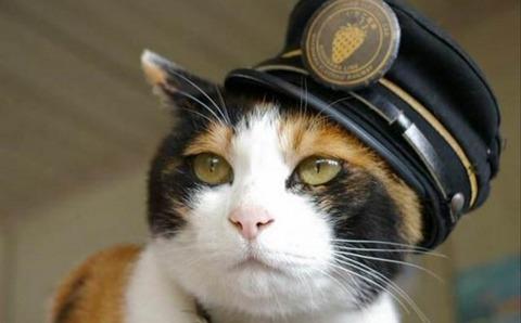 猫の鳴き声で降りるんだニャ~ 岡山 路面電車など降車ボタン交換
