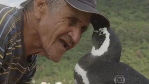 毎年8000キロを旅するペンギン 命の恩人に会うために
