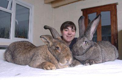 giant_rabbits
