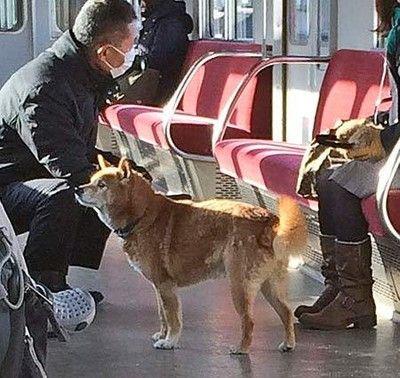 【わんこ】近鉄京都線で犬が無賃乗車。