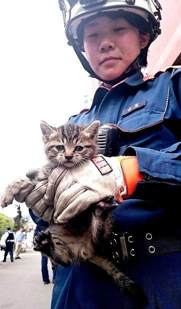 【話題】ビルのすき間で「ニャー、ニャー」子猫を救出 飼い主探しへ 甲府市