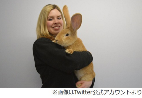 【巨大ウサギ】飼い主を募集中、犬並みに成長で「飼いきれない」と施設へ。