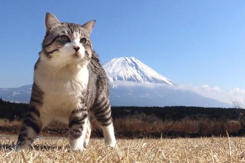【猫 画像】野良猫さん