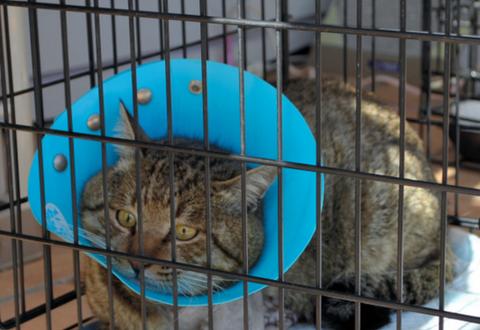 【猫】大けがから9カ月、ネコのジェイやっと保護 (JR高崎駅)