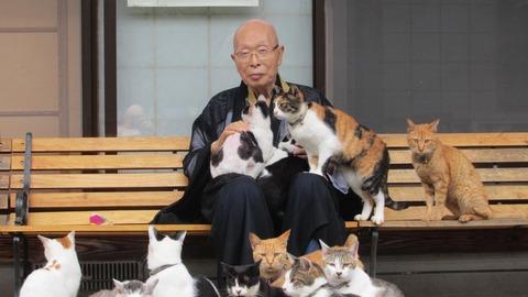 日本に猫ブーム到来!縁結びも…ネコ寺に来場者殺到