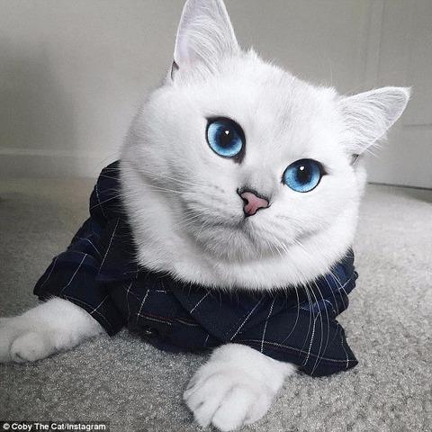 【猫・画像】世界一美しいネコ・美人ネコ画像