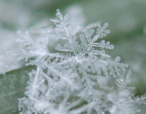 【大寒波】雪? 沖縄で風に舞う「白い粒」撮影される(動画)