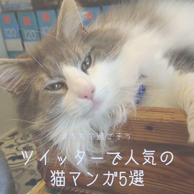 ツイッター猫マンガ 無料で読める人気5作品まとめ