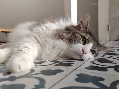 100均で猫の毛対策|ダイソーの洋服用毛玉取りブラシでカーペット掃除 我が家の愛猫おばけちゃん