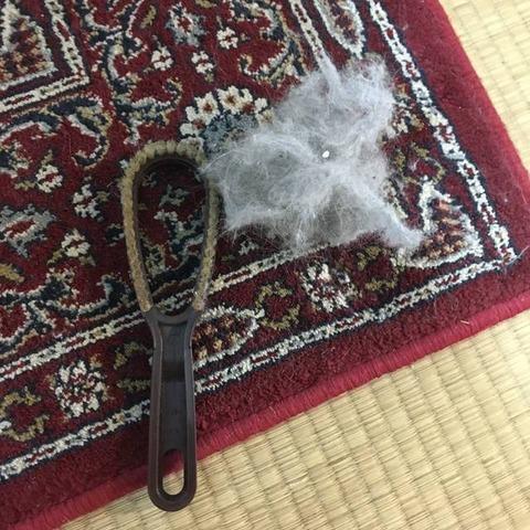 100均で猫の毛対策|ダイソーの洋服用毛玉取りブラシでカーペット掃除