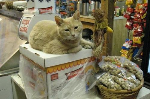 catmayer26