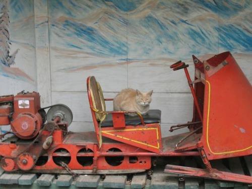 catmayer17