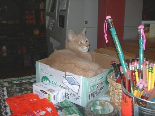 catmayer27