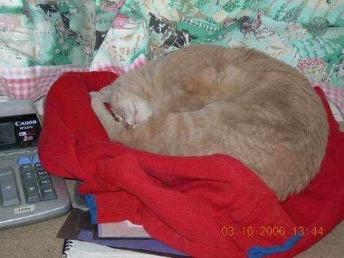 catmayer29