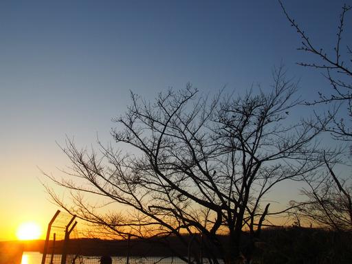 20170204・狭山湖なのだ空06・16時56分狭山湖スズメとムクドリ