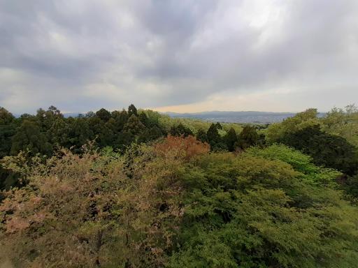 20210409・桜山展望台とあけぼの子どもの森04