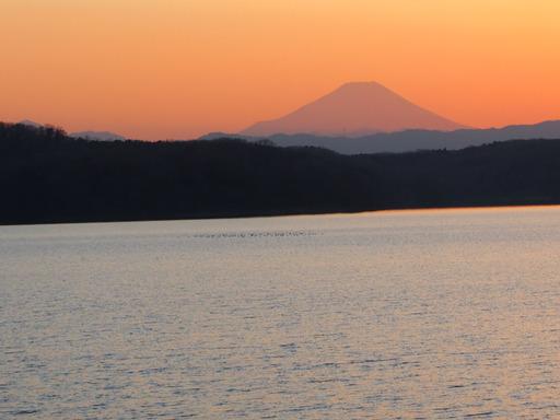 20170204・狭山湖なのだ空16・17時07分赤富士と水鳥