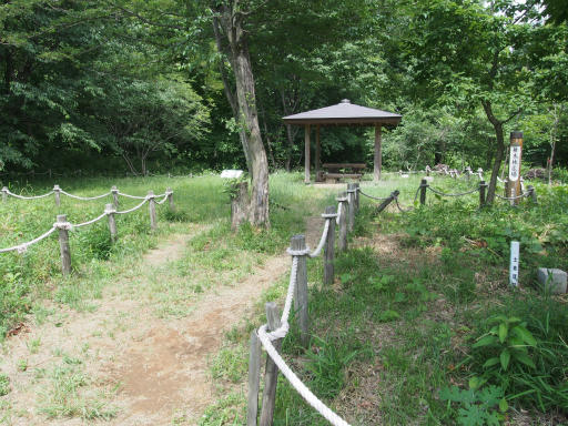 20170611・久々の緑の森1-22