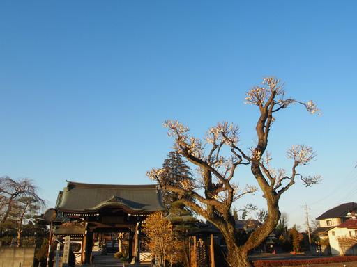 20170204・狭山湖なのだ空03・16時21分