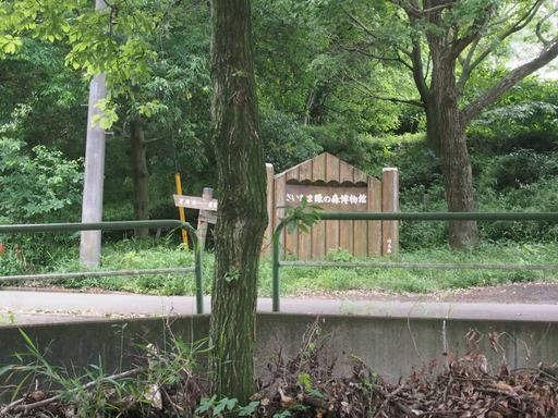 20170611・久々の緑の森1-01・中